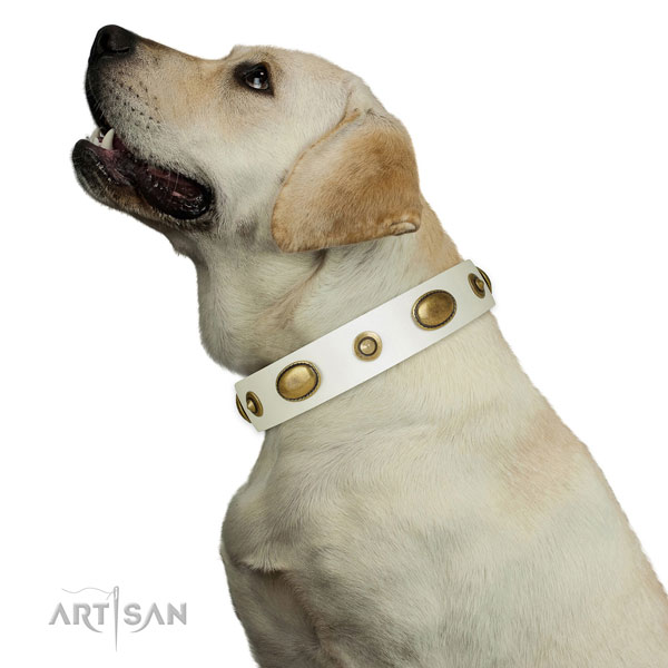 Comfortable wearing dog collar of leather with trendy decorations