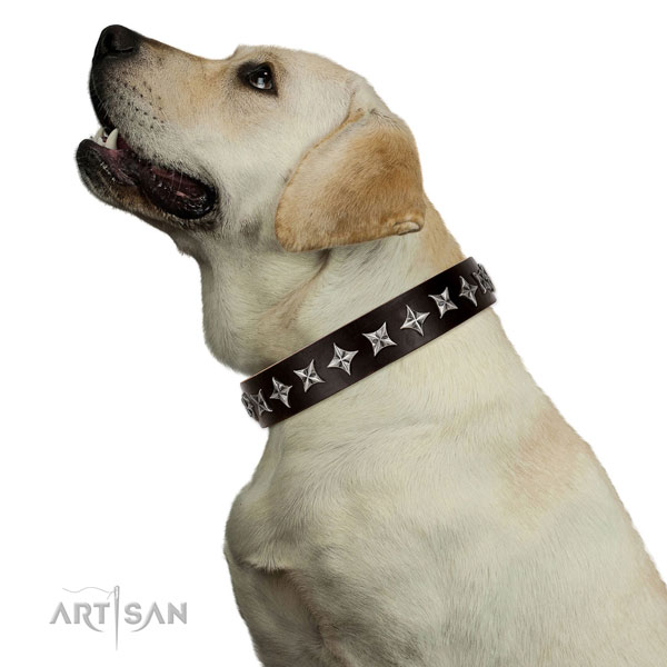Fancy walking embellished dog collar of finest quality natural leather