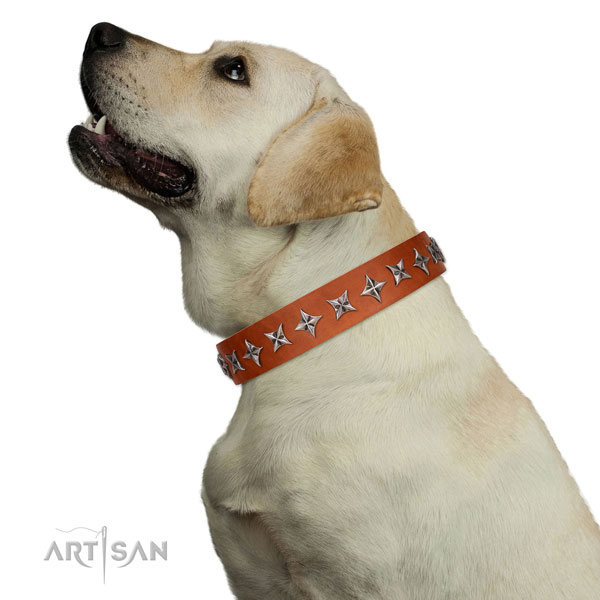 Best quality genuine leather dog collar with exceptional embellishments