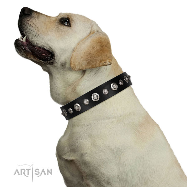 Top notch full grain natural leather dog collar with trendy studs