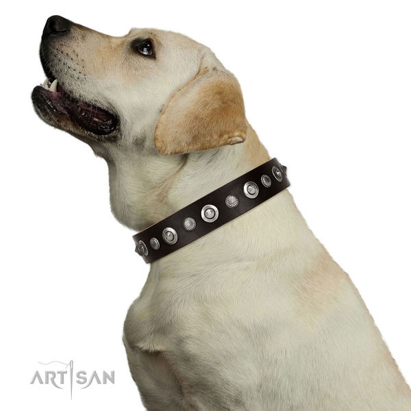 Top notch full grain natural leather dog collar with significant embellishments