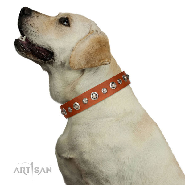High quality natural leather dog collar with unusual adornments