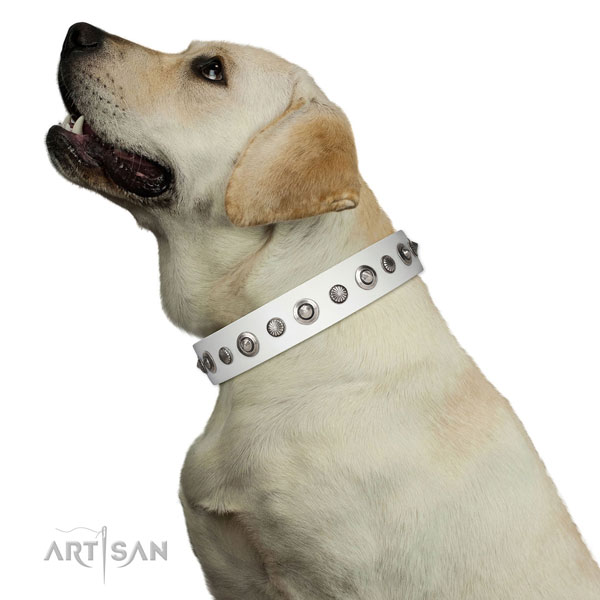 Genuine leather collar with strong traditional buckle for your stylish doggie