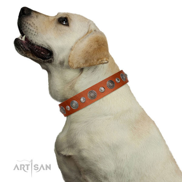Exceptional Full grain natural leather dog collar with corrosion proof hardware