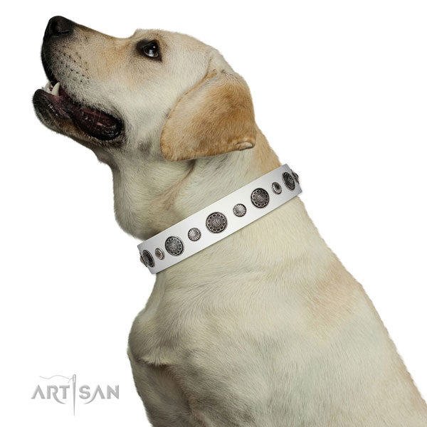 Fashionable leather dog collar with corrosion resistant fittings