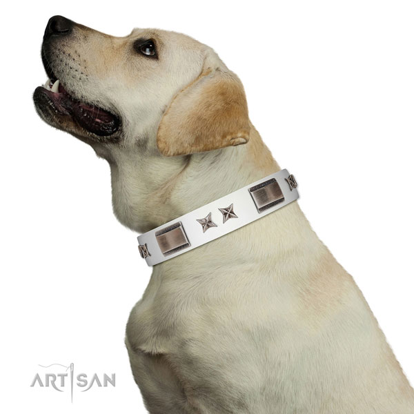 Studded collar of full grain genuine leather for your attractive canine