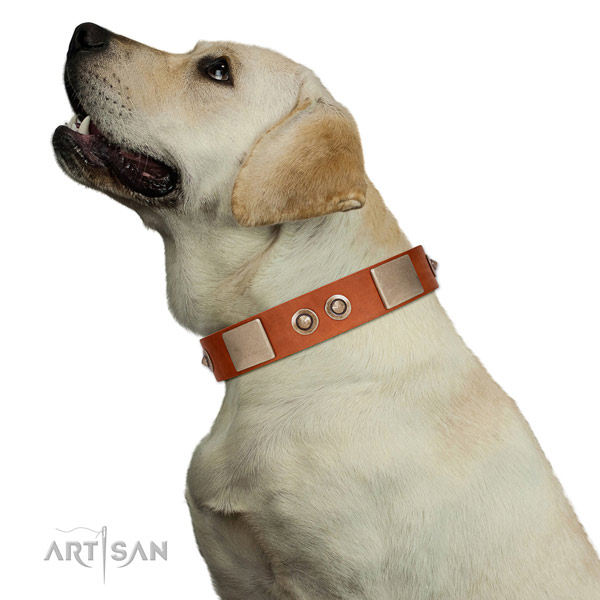 Corrosion proof traditional buckle on genuine leather dog collar for daily use