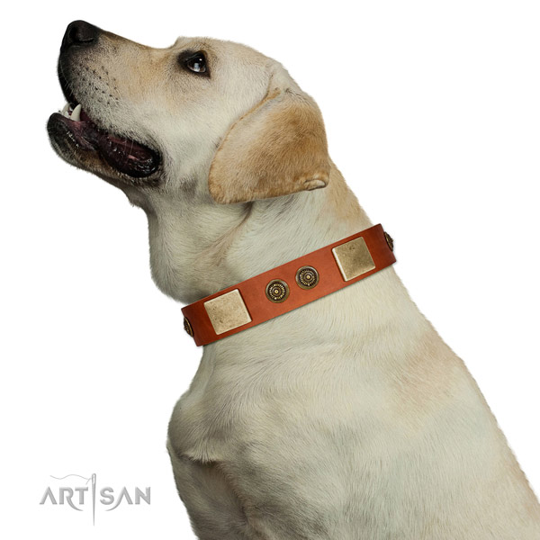 Best quality dog collar created for your stylish doggie