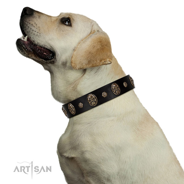 Easy wearing dog collar of genuine leather with significant adornments
