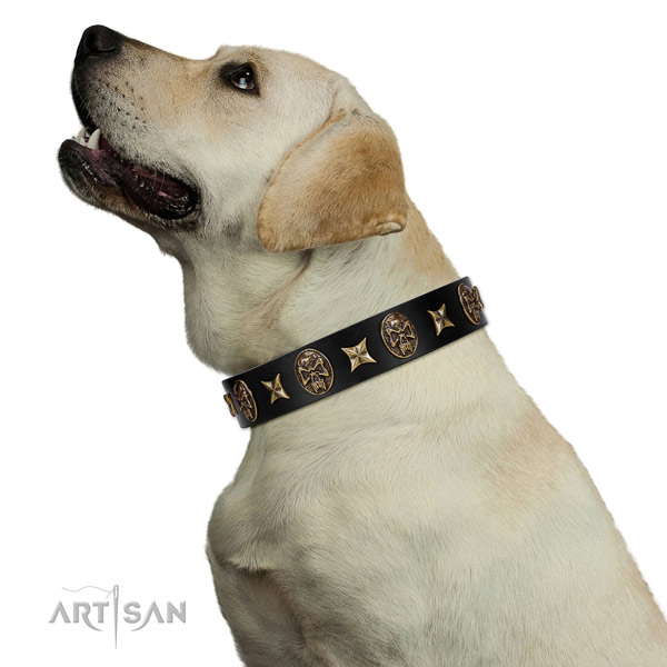 Fancy walking dog collar of natural leather with incredible embellishments