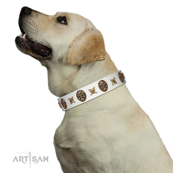 Extraordinary dog collar created for your lovely four-legged friend