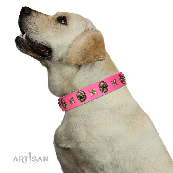 Fine quality dog collar crafted for your stylish pet