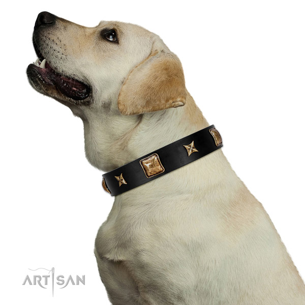 Unique dog collar crafted for your beautiful dog