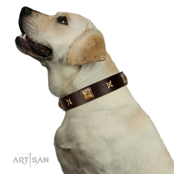 Trendy full grain natural leather dog collar with adornments