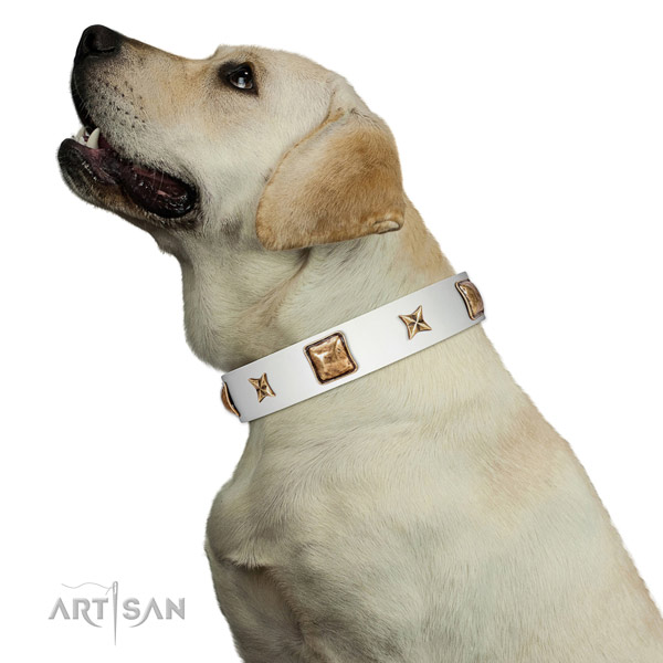 Genuine leather collar with studs for your beautiful pet