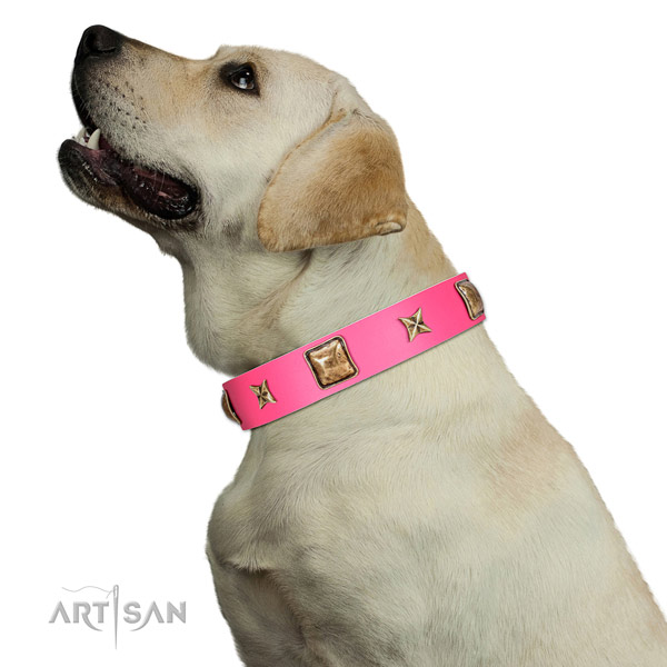 Genuine leather dog collar of quality material with stylish adornments