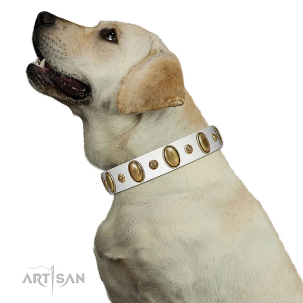 Everyday use soft full grain genuine leather dog collar with embellishments