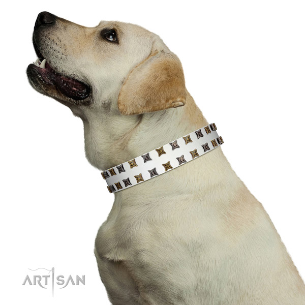Reliable leather dog collar with studs for your canine