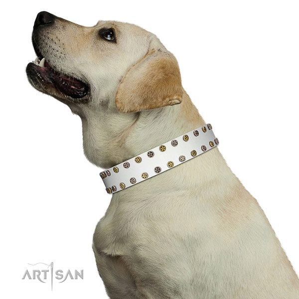 Extraordinary full grain leather dog collar with reliable embellishments