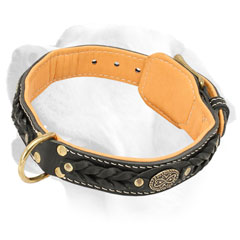 Handcrafted Leather Labrador Collar Decorated with Braids