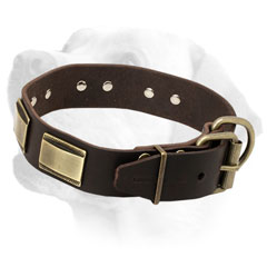 Firm Leather Labrador Collar Equipped with Vintage Brass Buckle