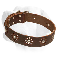 Leather Labrador Collar Decorated with studs