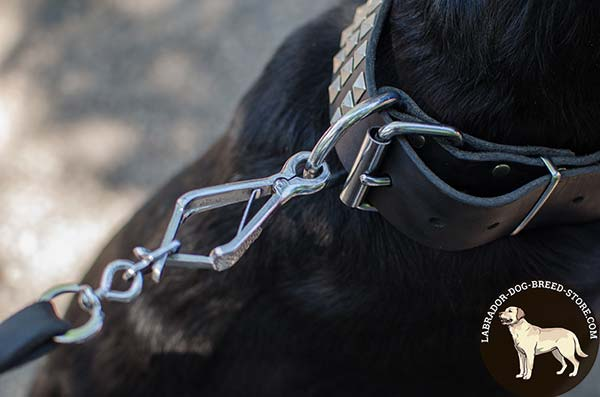 Durable Studded Leather Labrador Collar with Nickel Plated Hardware