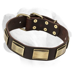Leather Labrador Collar Decorated with Brass Plates