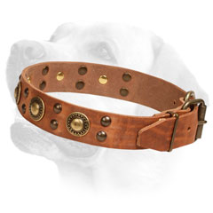 Leather Labrador Collar Decorated with     Brass Studs and Circles