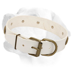 Training Leather Labrador Collar with Brass Buckle