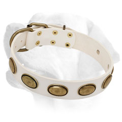 Durable White Leather Labrador Collar with Rustless Brass Plates for Walking