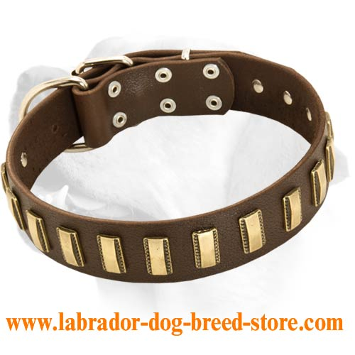 ... Labrador dog harness, Labrador dog muzzle, Labrador dog collar, Dog