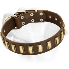 Labrador Decorative Collar With Brass Plates