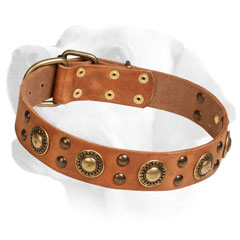 Firm     Leather Labrador Collar Decorated with Brass Circles