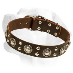 Firm Leather Labrador Collar Equipped with studs and conchos