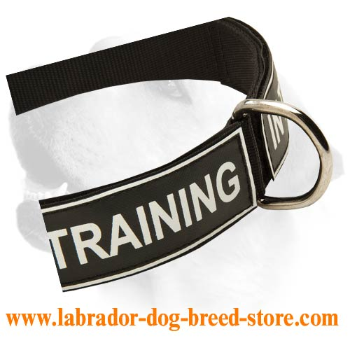 Labrador Lightweight Nylon Collar