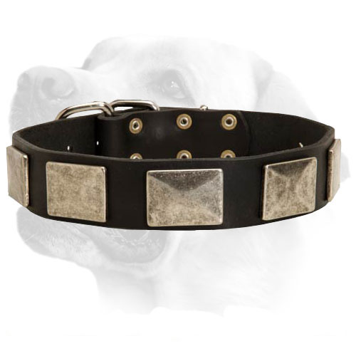 Buckled Wide Dog Collar For Labradors