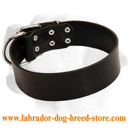 Labrador Wide Dog Leather Collar For Everyday Walking