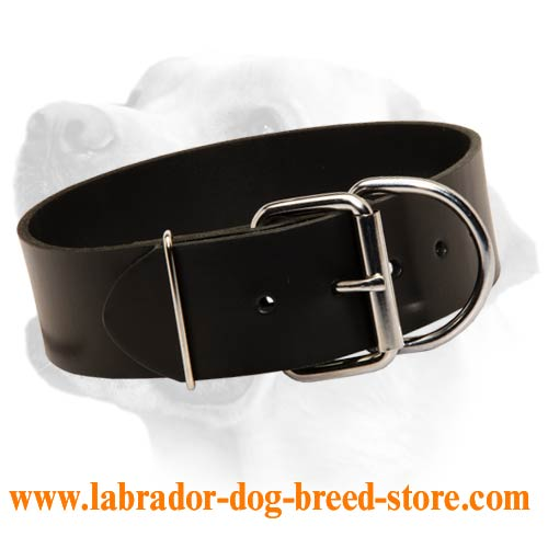 Labrador Wide Leather Dog Collar