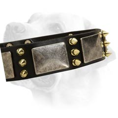 Exclusive Leather Dog Collar For Labrador