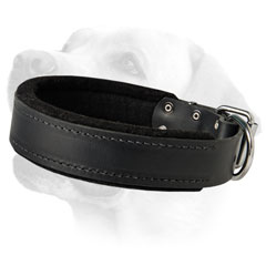 Labrador Leather Dog Collar