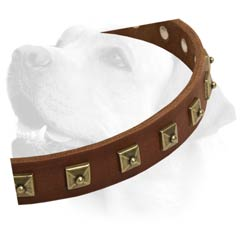 Labrador Handcrafted Leather Dog Decorative Collar
