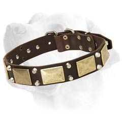 Studded Leather Collar for Labrador Walking in Style