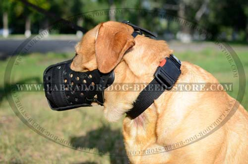 Handmade Leather Labrador Muzzle With Steel Reinforcement