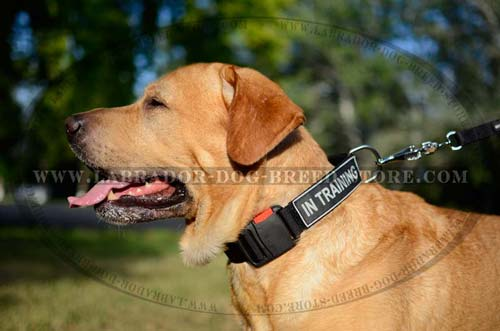 Labrador Convenient Nylon Dog Collar