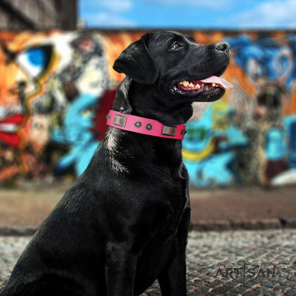 Labrador significant adorned leather dog collar for stylish walking