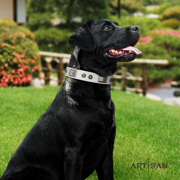 Labrador trendy embellished full grain genuine leather dog collar for daily walking