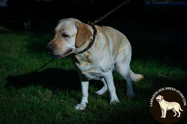 Labrador brown leather collar with rust-resistant brass plated hardware for improved control