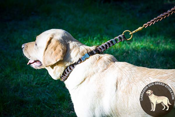 Labrador brown leather collar with rust-resistant fittings for basic training