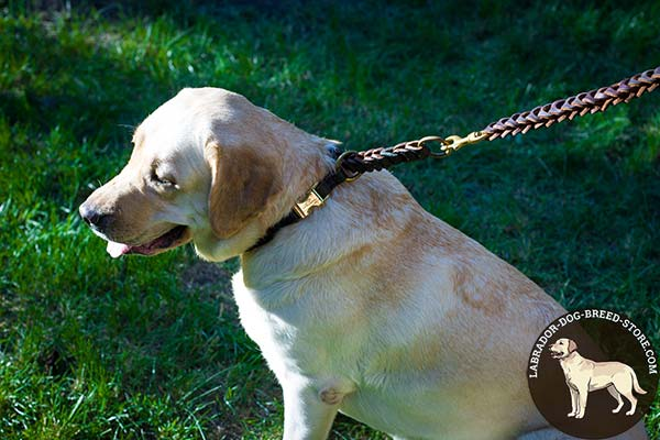 Stout Braided Leather Labrador Choke Collar for Behavior Correction